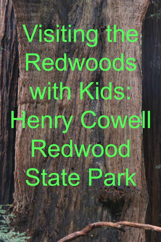 Visiting the Redwoods with Kids: Henry Cowell Redwood State Park | www.carriereedtravels.com