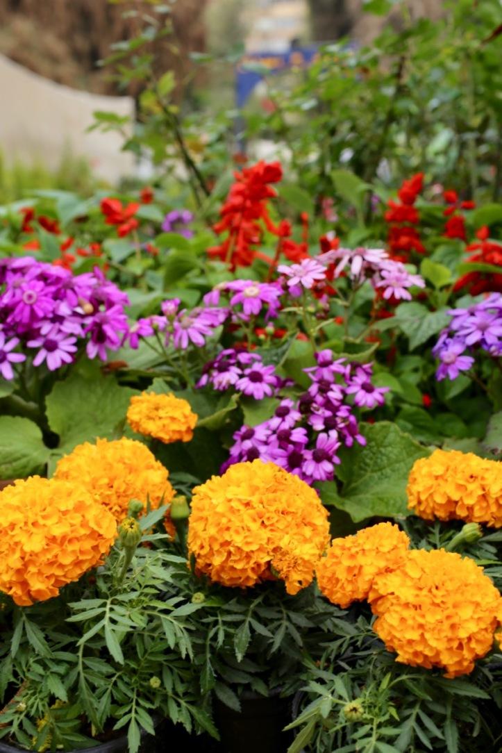 Blog_Orman Garden Show - 1