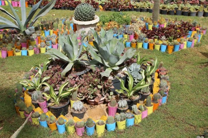 Blog_Orman Garden Show - 14