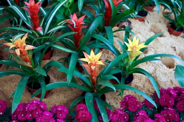 Blog_Orman Garden Show - 16