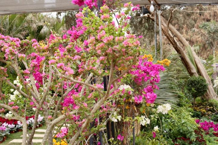 Blog_Orman Garden Show - 2