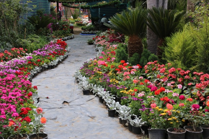 Blog_Orman Garden Show - 20