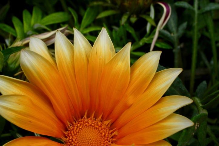 Blog_Orman Garden Show - 21