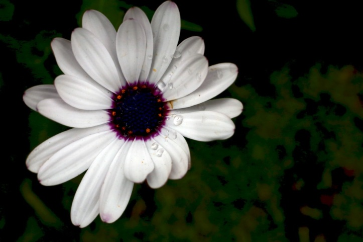 Blog_Orman Garden Show - 5
