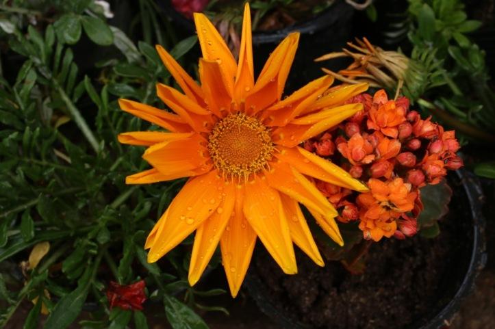 Blog_Orman Garden Show - 6