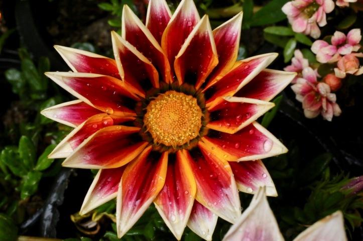 Blog_Orman Garden Show - 7