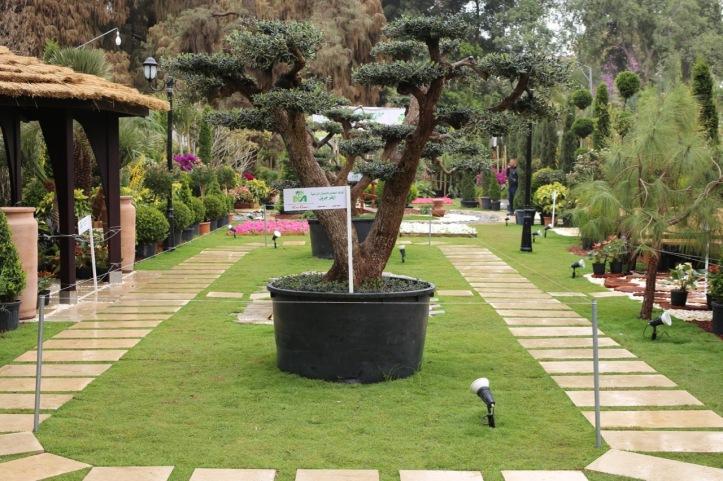 Blog_Orman Garden Show - 9