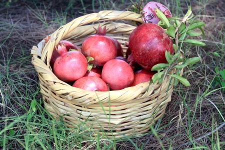 Pomegranate Festival at Sara's Organic Farm, near Cairo, Egypt |www.carriereedtravels.com