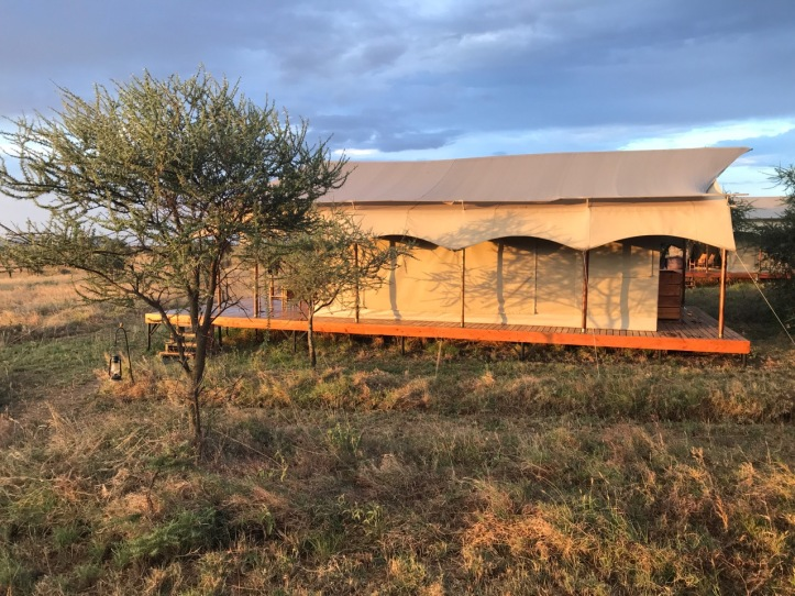 Kids on Safari: Siringit Serengeti Camp, Tanzania Review | www.carriereedtravels.com