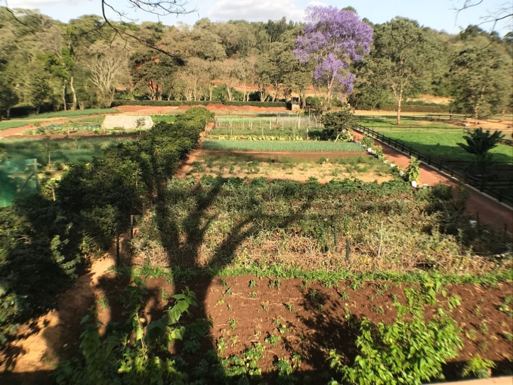 Blog_Gibbs Farm - 14