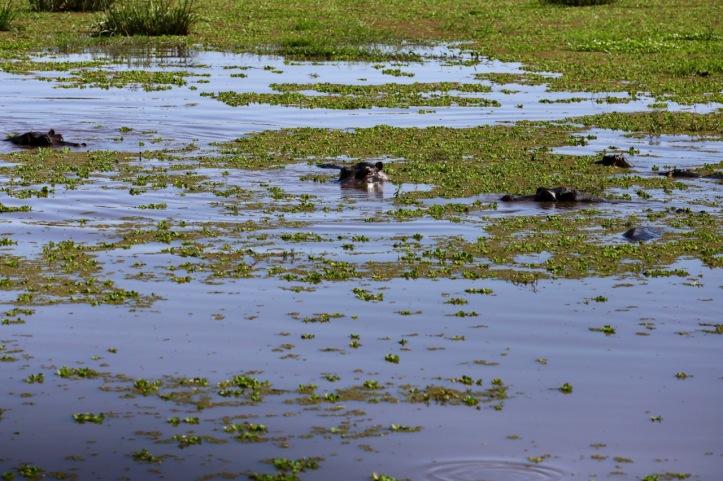 Blog_Lake Manyara - 10