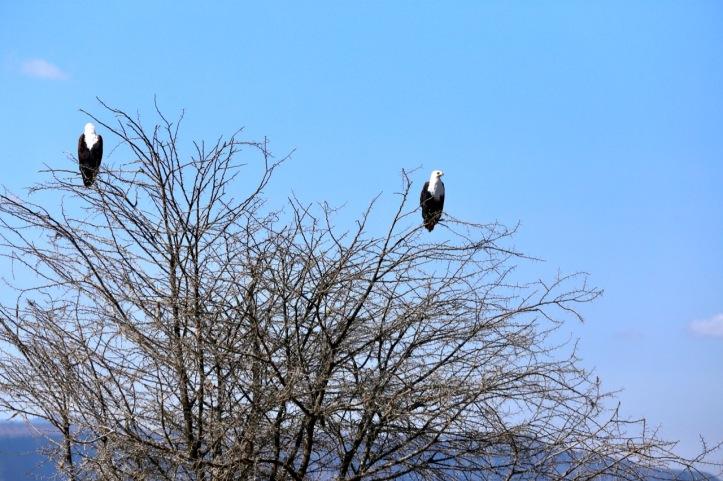 Blog_Lake Manyara - 12