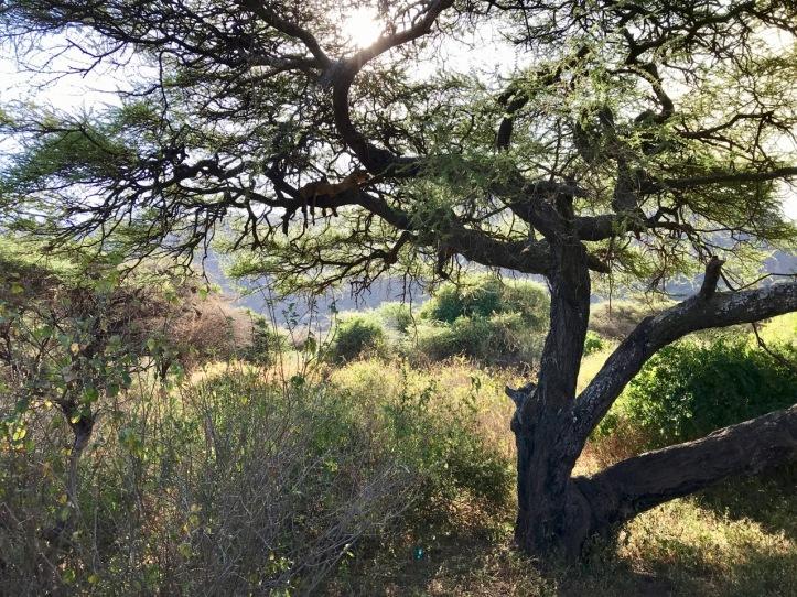 Blog_Lake Manyara - 13