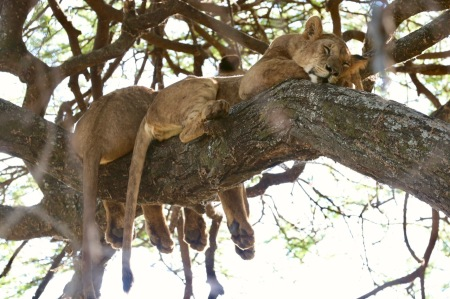 Kids on Safari: Lake Manyara National Park and Kirurumu Manyara Lodge | www.carriereedtravels.com
