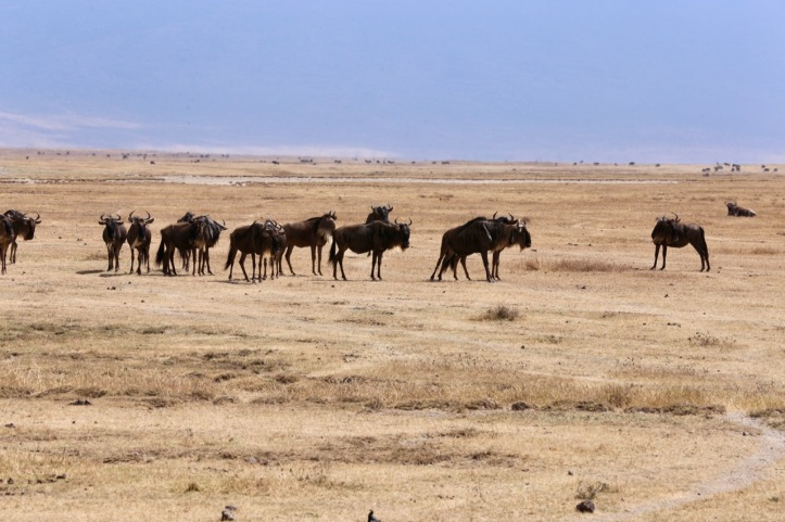Kids on Safari: Ngorongoro Crater, Tanzania