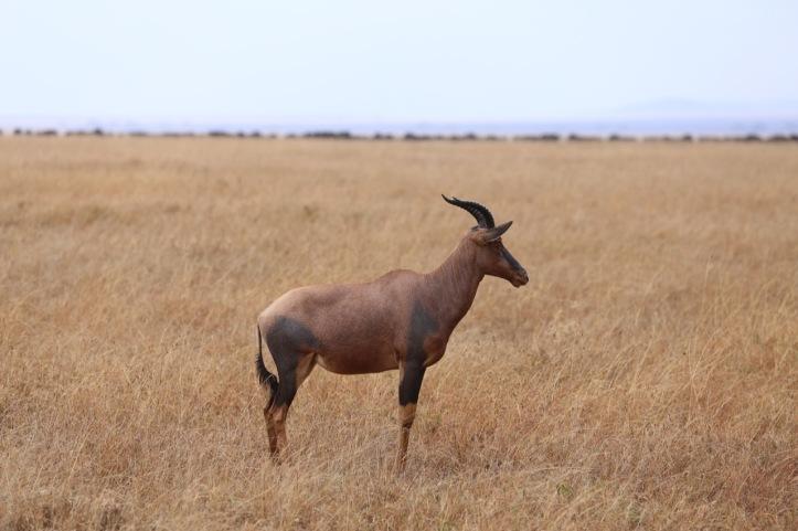 Blog_Serengeti - 19