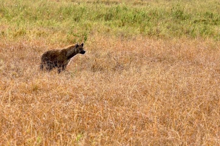 Blog_Serengeti - 21