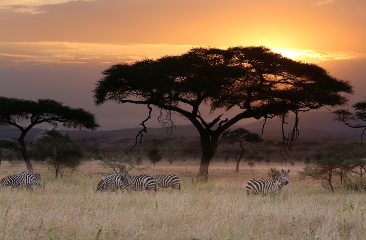 Sunset with Zebras.jpg
