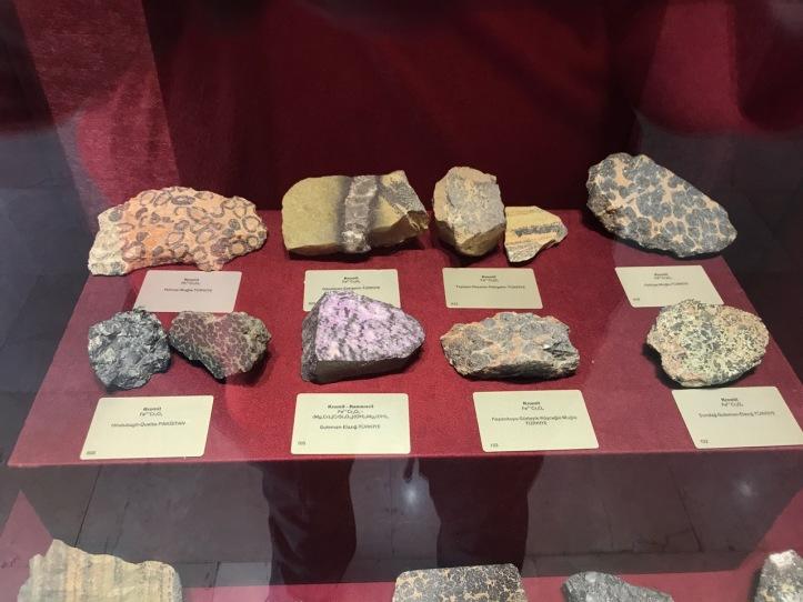 Blog Natural History Museum - 14