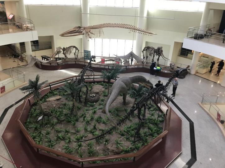 Blog Natural History Museum - 20