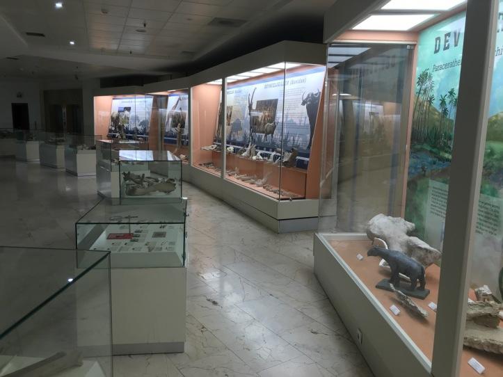 Blog Natural History Museum - 8